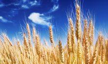 Nach der Absage: Bayer lässt Anhebung seines Kaufangebots für Monsanto offen