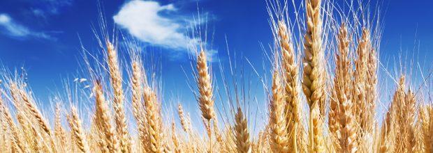 Monsanto zeigt sich vom Übernahme-Angebot von Bayer unbeeindruckt – und fordert mehr Geld. (itestro - Fotolia)