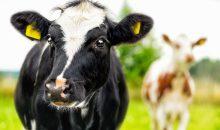 Evonik übernimmt Probiotikageschäft von Norel