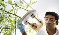 Platz 6: 62 Mrd. US-Dollar hat Bayer im Mai für die Übernahme des amerikanischen Saatgutherstellers Monsanto geboten. Allerdings dürfte der Deal deutlich teurer werden. Bild Bayer