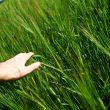 Nachgelegt: Bayer erhöht Angebot für Monsanto erneut