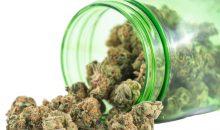 Hanfblüten sind für die pharmazeutische Industrie ein wichtiges Rohprodukt, dessen Bedeutung mit der teilweisen Legalisierung von Cannabisprodukten zunehmen wird. (Bild: rgbspace/openrangestock – Fotolia)