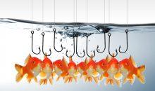 Die Omega-3-Fettsäureprodukte sollen in der Fischzucht zum Einsatz kommen. (Bild: Chris Bett – Fotolia)