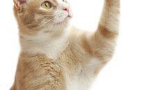 Bayer stärkt sein Geschäft mit Gesundheitsprodukten für Haustiere. (Bild: Evgenij Gorbunov – Fotolia)