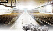 Das Malz ist ein entscheidender Rohstoff für Bierbrauer. Entsprechend wichtig ist es, dass in der Mälzerei alles hygienisch abläuft. Die Glattmotoren haben keine Kühlrippen, an denen sich Ablagerungen bilden könnten. (Bild: Nord-Drivesystems)
