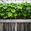 """Mit der Technologie lassen sich Wirkstoffe aus Pflanzenwurzeln """"melken"""". (Bild: Clariant)"""