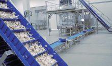 Nachdem die Pilze vakuumisiert wurden, werden sie in den Beuteln weiterbefördert, am Ende kurz erhitzt und so haltbar gemacht. In der Ecopouch-Beutelverpackung sind sie etwa zwei Jahre haltbar. (Bild: Dorner)