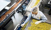 Nur durch höchste Ansprüche und strenge Kontrollen kann Ricola die Qualität der Kräuterprodukte gewährleisten.