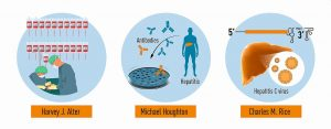 einblick_nobel_medicine2020-figure3-en